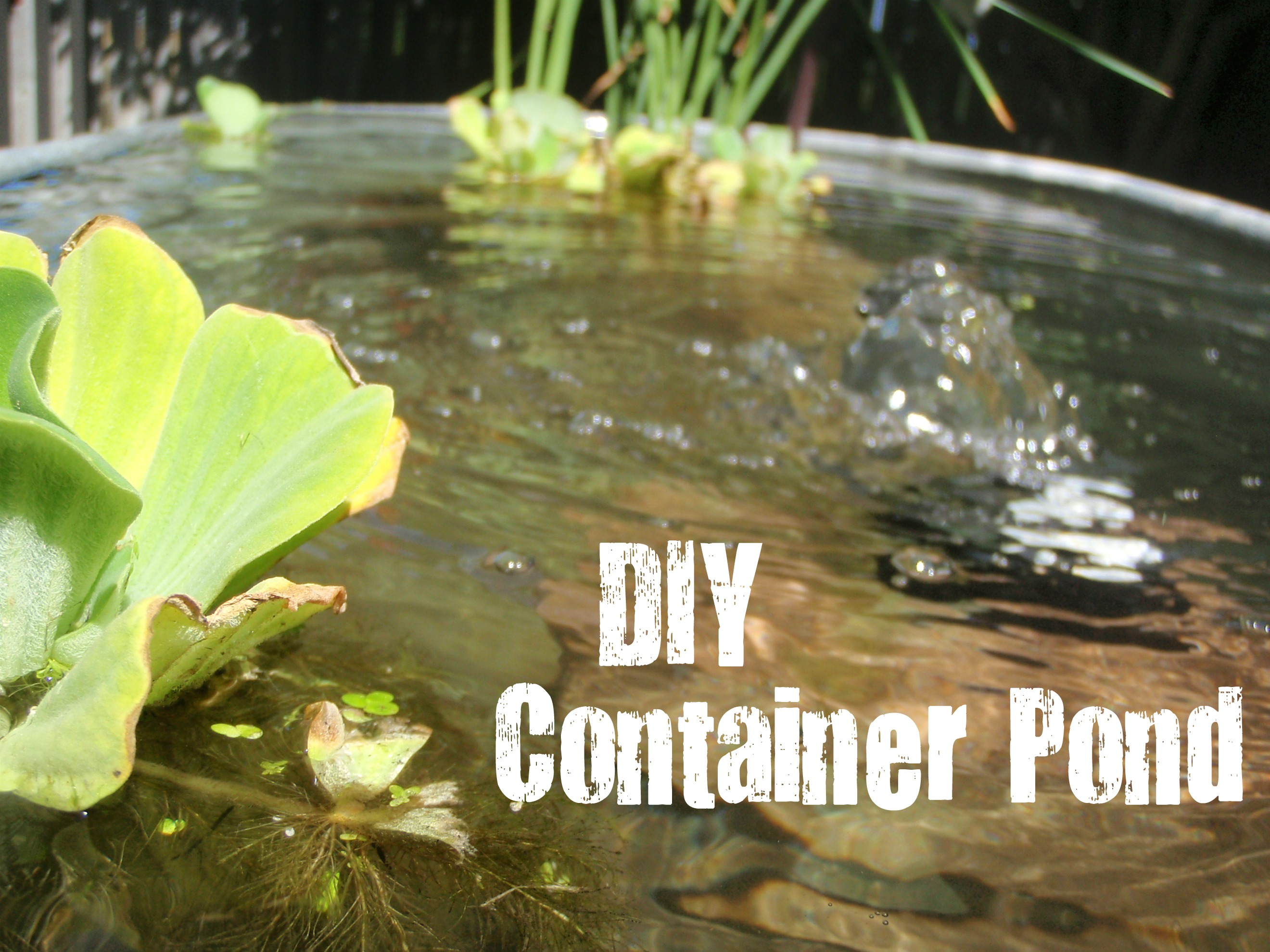 DIY Above-Ground Pond | Newlywed Me with Chelsey P