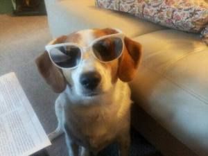 Sodog in sunglasses